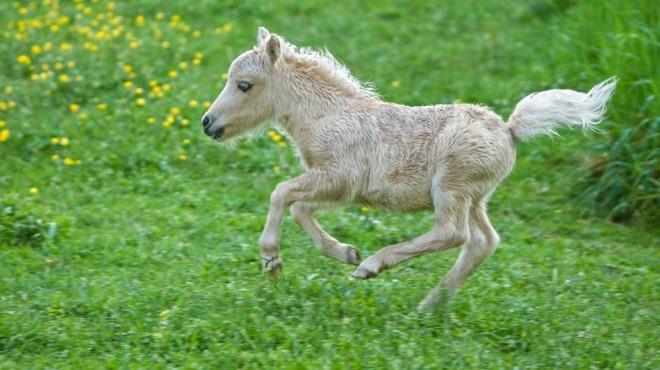 baby-pony